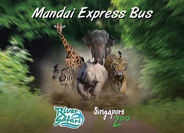 Zoom Down to the Zoo on Mandai Express